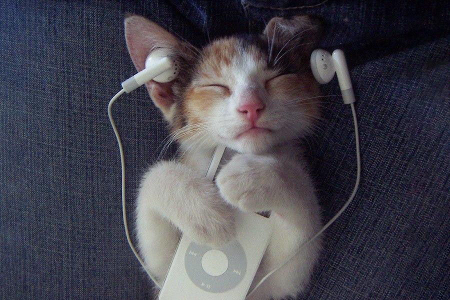 Catnip Classics Album Review